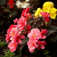 Idées de jardinage pour petits jardins