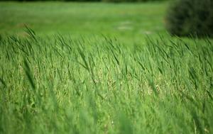 Utilisation de plastique noir pour tuer l'herbe de façon naturelle