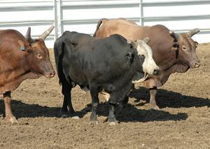 Comment monter Peser Bars à un Chute élevage
