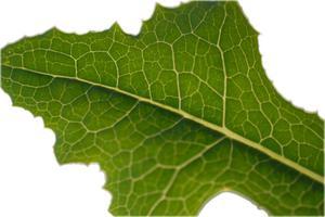 Plante membrane cellulaire Structure