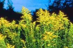 Quelles sont les fleurs poussent sur les rives de l'océan Atlantique?