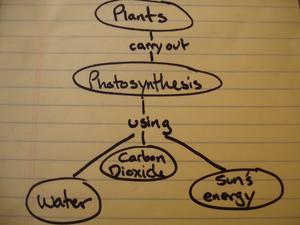 Comment faire une carte conceptuelle pour les plantes