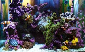 Comment faire Aquarium lit de sable Filtration