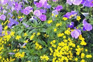 Comment mettre ensemble Plantes à fleurs