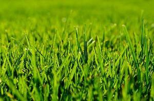 Pouvez-vous réduire Wet herbe avec une tondeuse électrique?