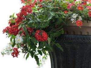 Comment arranger les fleurs dans un planteur