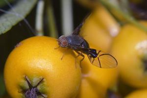 Comment faire un piège maison Fruit Fly With Vinaigre