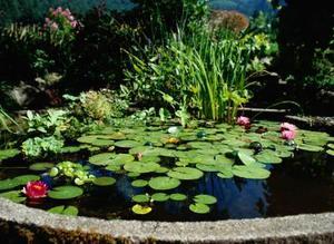 Idées pour Inexpensive Backyard Landscaping