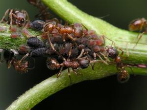 Comment se débarrasser des fourmilières