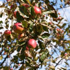 Pulvérisation annexe pour les arbres fruitiers