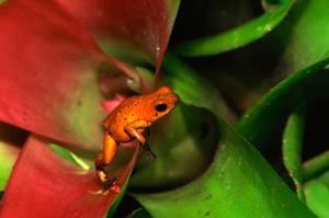Colorful Plantes et arbres pluie des forêts tropicales