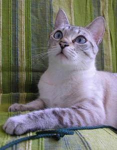Thyroïde médicaments pour chats