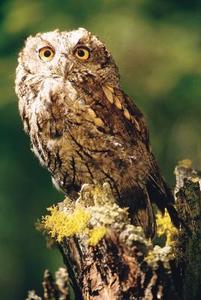 Owl Cadeaux