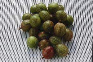Comment tuer Gooseberry noctuelle des fruits