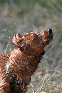Comment utiliser peau si douce pour les tiques sur les chiens