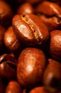 Comment cultiver le café à partir de graines
