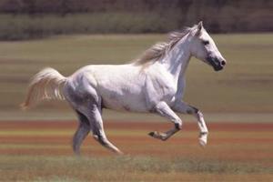 Comment accélérer un cheval Lazy