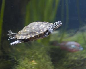 DIY: Comment faire pour créer une tortue Terrarium