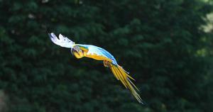 Comment Coupez plumes de queue