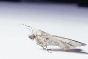 Comment éradiquer les mites à la maison