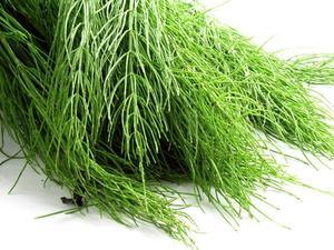 Comment tuer les mauvaises herbes prêle