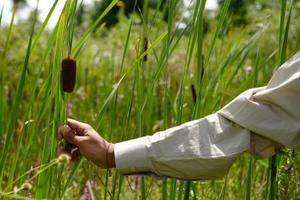 Comment tuer les mauvaises herbes indésirables étang