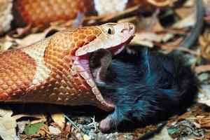 Types de serpents à Salisbury, Maryland