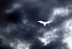 Batman Parti Favor Idées