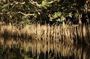 Comment faire un aquarium Décoration Mangrove