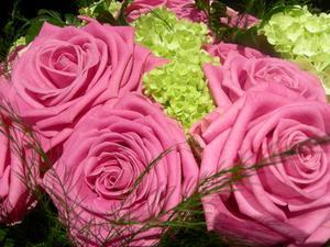 Nourriture pour plantes maison pour Roses