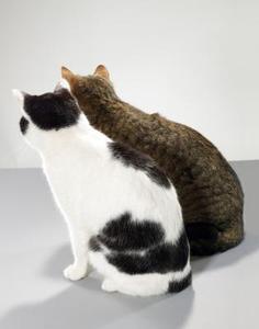 Comment faire un chat mâle et femelle chat vivre ensemble