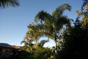 Comment prendre soin d'un nouveau sétaire Palm
