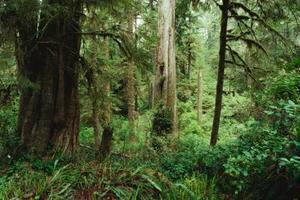 5 couches de la forêt tropicale