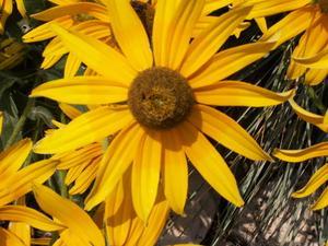 Liste des plantes vivaces à fleurs
