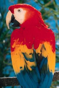 Quels sont certains des ancêtres d'un perroquet?