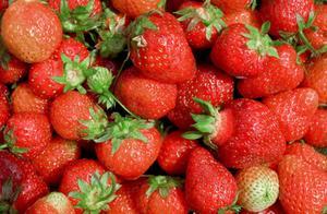 Comment planter fraises d'automne au Texas