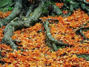 Comment tuer Roots dans les égouts Lines
