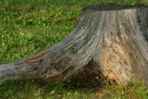 Comment faire une souche d'arbre faux