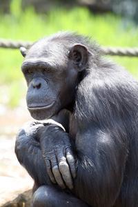 Comment faire un modèle 3D d'un chimpanzé