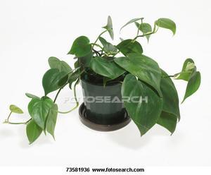 Comment identifier les types de plantes d'intérieur