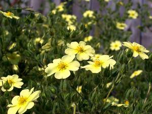 Les meilleurs arbustes pour ensoleillé et sec Climats