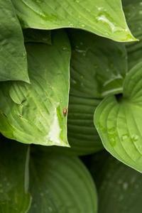 Comment économiser de l'eau de pluie pour les plantes de jardin