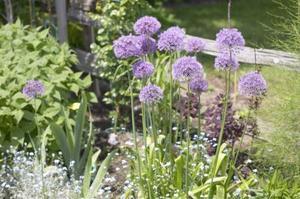 Recommandé de pré-émergence des mauvaises herbes herbicides pour parterres de fleurs