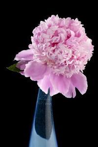 Vivace Fleur Identification des espèces