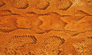 Comment garder la balance sur une peau de serpent tannée