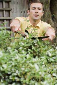 Comment faire une bordure Arbuste