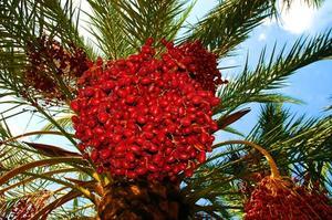Comment identifier un arbre de Fruit