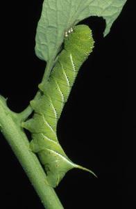 Comment identifier un site Caterpillar