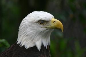 Parti favoriser idées pour un tribunal eagle scout d'honneur