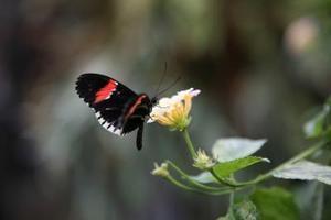 Comment préserver papillons pour l'encadrement